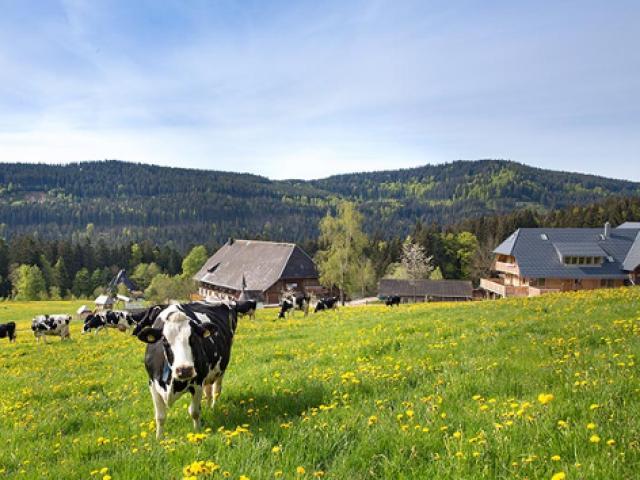 Ferien auf dem Bauernhof Weberhof Hinterzarten