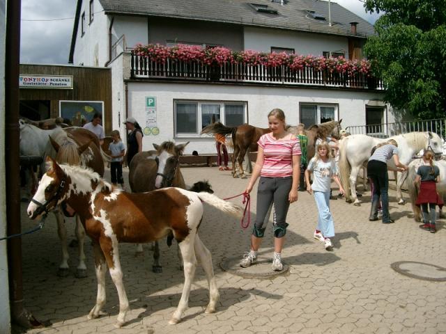 Ponyhof Ludwig Reit- und Fahrstall